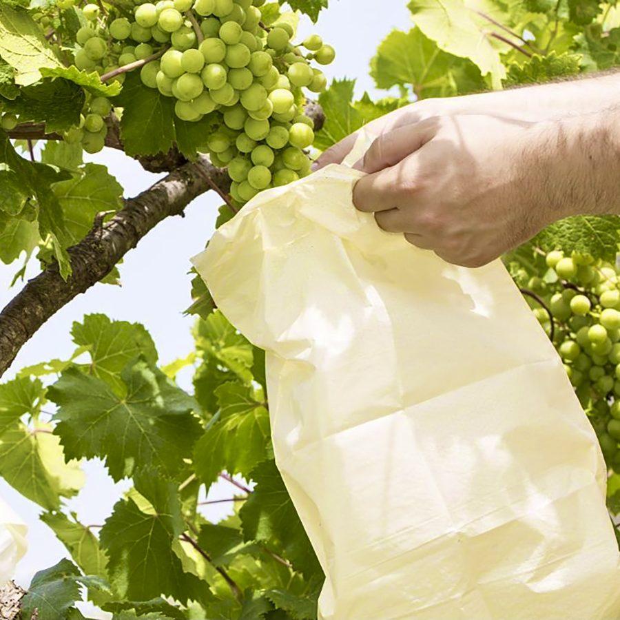 bolsa protectora uva